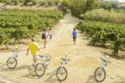 EBike and wine tasting from Barcelona