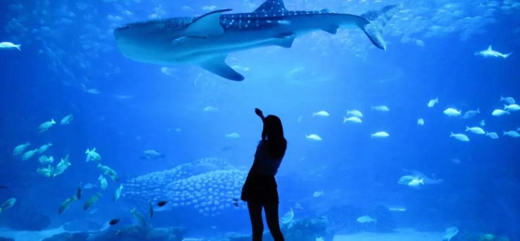 visit L'Aquarium de Barcelona